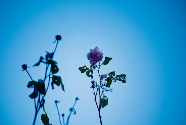 松本さん 花