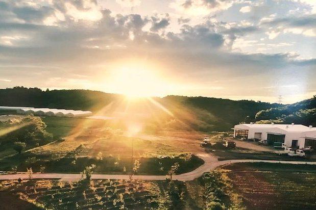 オーガニックガーデンから草間彌生の作品まで サステナブルファーム&パーク「KURKKU FIELDS」で食・農・アートを体験!