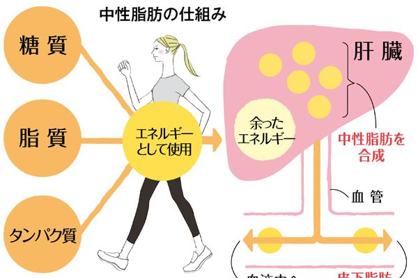 更年期から、中性脂肪とコレステロールを適正に保つことが大切なわけ/急速に進む血管の老化に要注意!(前編)