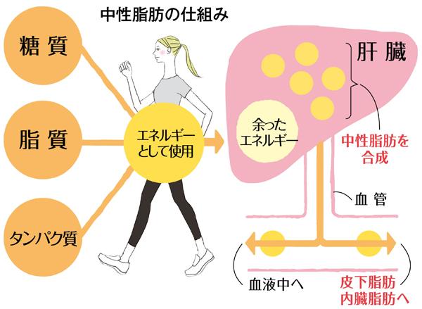 脂肪 中 内臓 の と 違い 脂肪 性