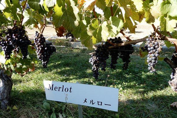 大人軽井沢の楽しみ方 温泉にスパ、仏大統領絶賛ワインも