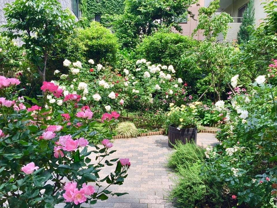 朝倉さん ガーデン