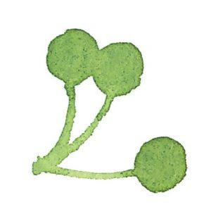 がんサバイバー 葉っぱイラスト2