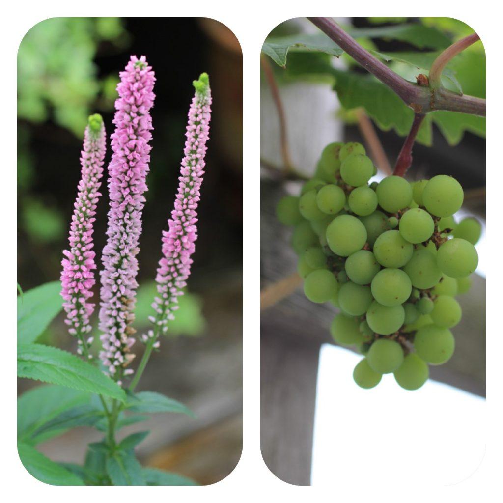 花とブドウ マドレーヌ