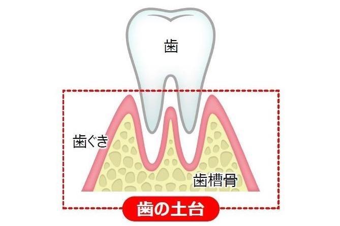【チェックテスト付き】50代の3人に1人が固いものを思い切り噛めない⁉歯を支える「歯の土台」ケアがオーラルケアの新常識に