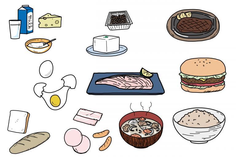 1日に必要なタンパク質はとれてる?おもな食品のタンパク質量は?