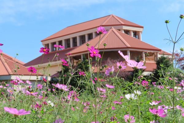 季節の花を楽しんでいますか? コスモスの摘み取り体験へ。