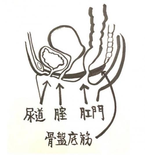 樫出さん 子宮イラスト