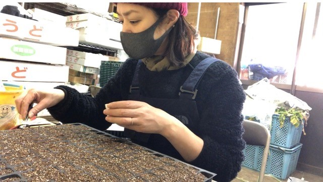 種まき準備中の加藤紀子さん
