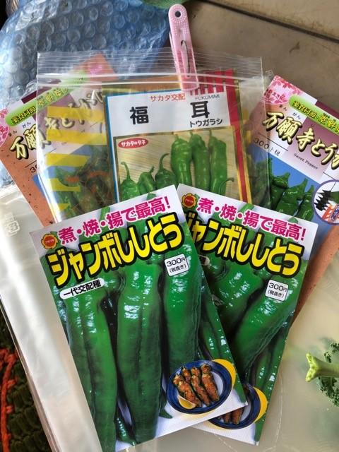 ししとうなど野菜の種