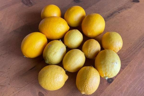 無農薬のレモンをたくさんいただいたので作ってみたもの5つ