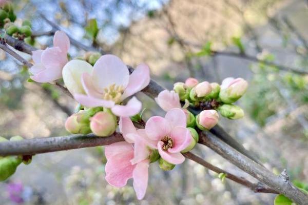 花や自然に癒されますね。生田緑地はもう春でした。