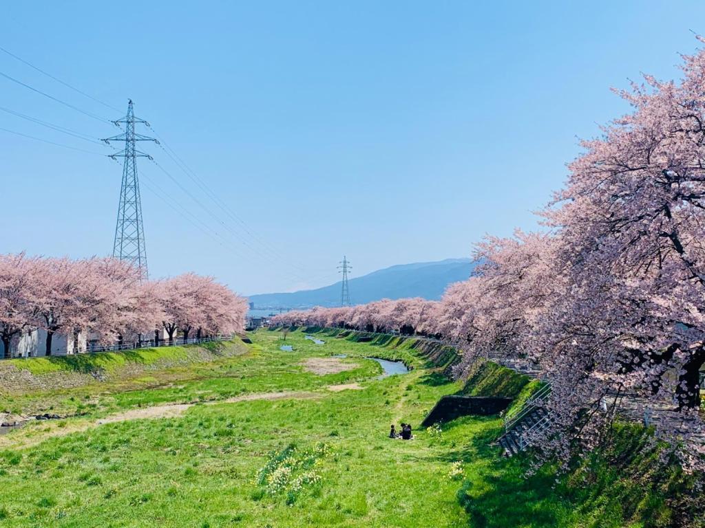 約4キロにわたり、横河川の堤防に連なる400本の桜並木