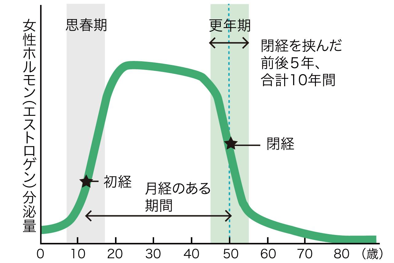 女性ホルモン増減のグラフ