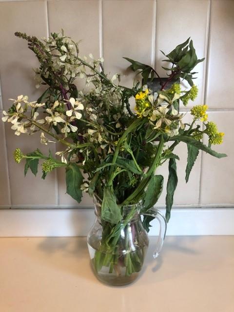 ルッコラ、サラダほうれん草、三池高菜の花