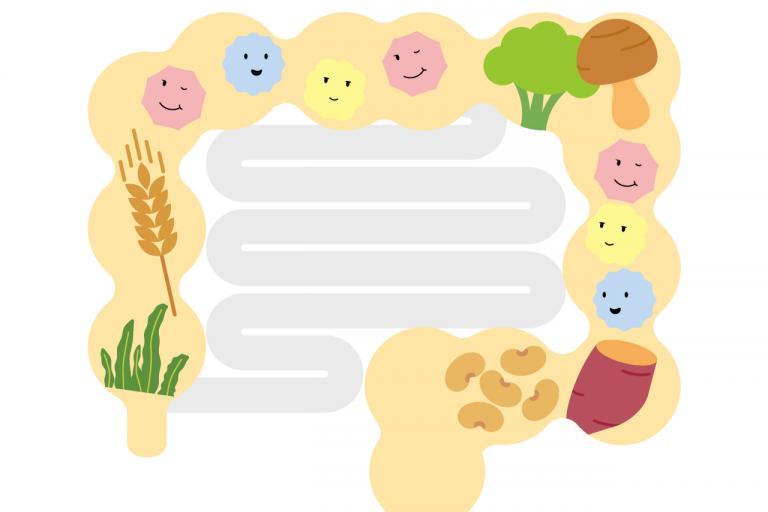 3つの食物繊維をバランスよくとる/食物繊維の効率的なとり方①