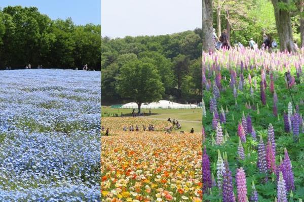 全国で初めての国営公園「武蔵丘陵森林公園」は春満開です