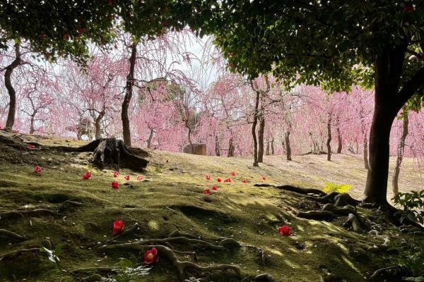 京都の幻想的な春。やっぱりおでかけするのは楽しいですね。