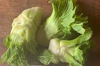 新しい野菜「アーサイ」で、脳も体も元気に