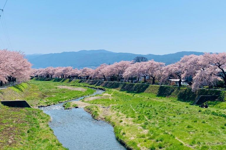 今週の新着記事【ランキングトップ10】「桜のトンネル」が見事な400本の桜並木は秘密のお花見スポットです