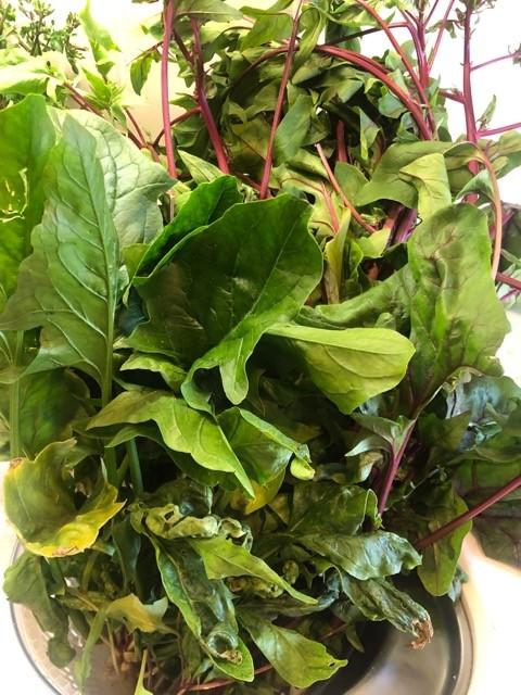 葉野菜の水揚げ