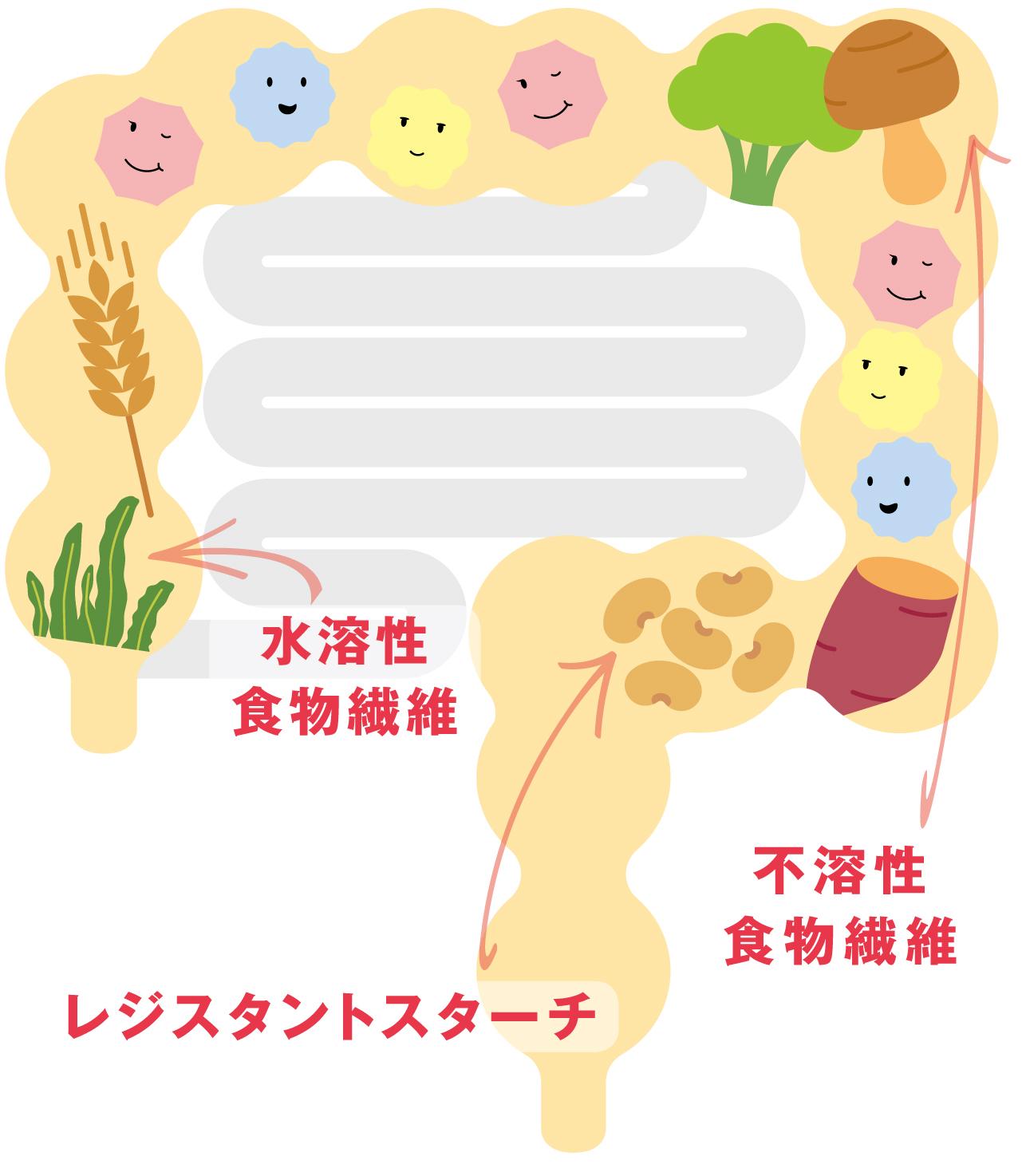 腸内で働く3つの食物繊維