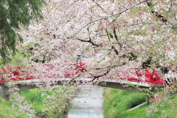 桜を見ながらご利益も! 埼玉県にある瀧宮神社と唐沢川の桜堤がおすすめです