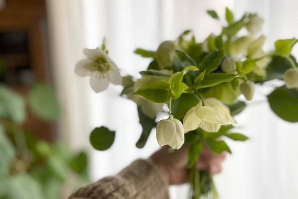 クリスマスローズの花束と春のテーブル