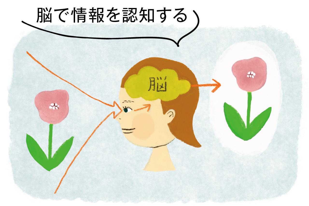 目から入った視覚情報は脳で処理されることで認識