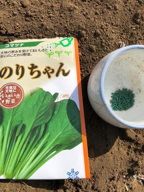 小松菜の種「のりちゃん」