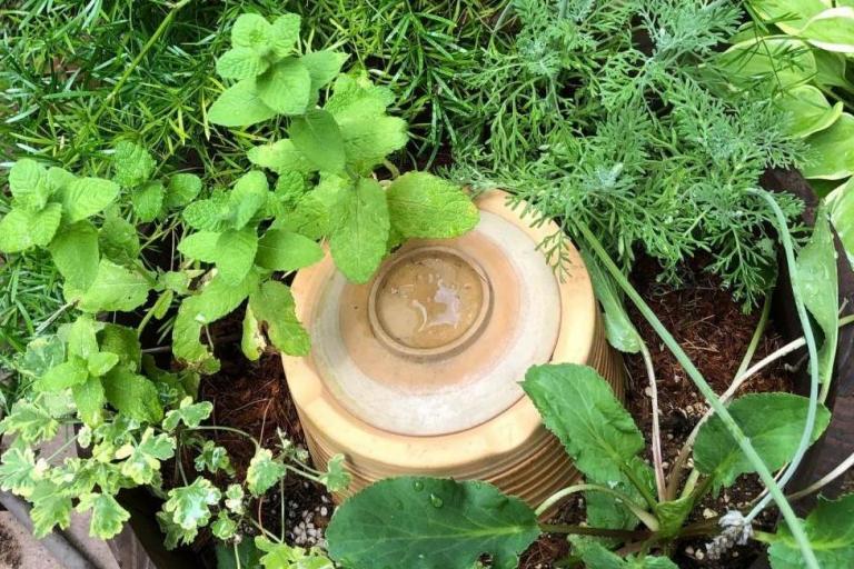 オシャレな寄せ植えが、土を作りゴミを減らすコンポスターに!その立役者「ミミーちゃん」の正体とは?
