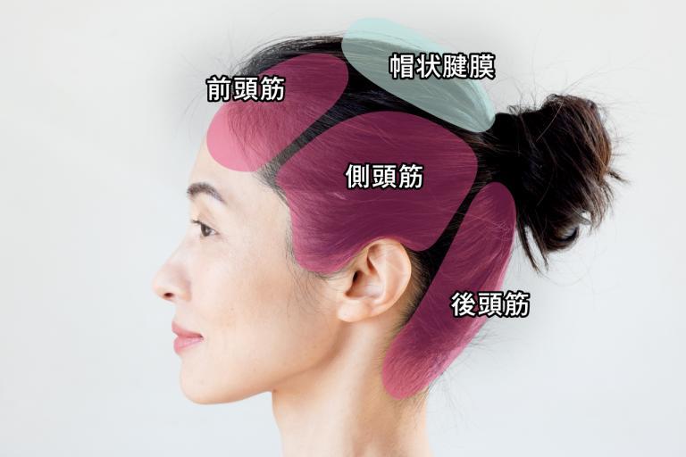 頭皮マッサージの鍵、「頭皮3筋」とは?/毛髪診断士・伊熊奈美さんの素髪を磨くワザ①